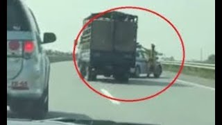 Police Vietnam chase, catch a truck carrying pigs, causing a traffic accident and then ran away