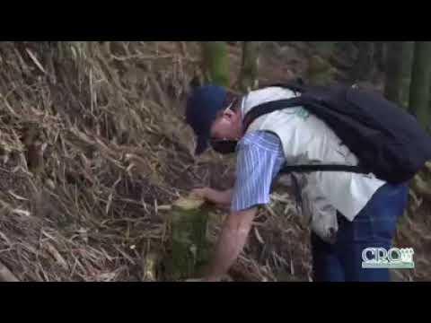 CRQ y 7 detenidos  en el Quindío por cortar guadual y arboles ilicitamente