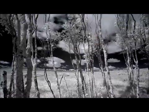 Electro Vampires - Raven
