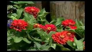 Get Growing 8-butterfly Garden Plants