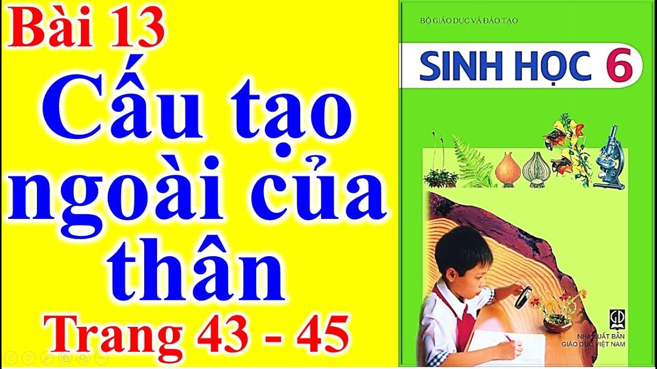 Sinh Học Lớp 6 Bài 13 – Cấu tạo ngoài của thân – Trang 43 – 45