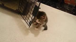 New Kittens Come Home for the First Time