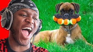 Funniest Dog Moments