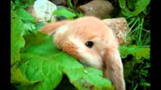 Картинки с карликовыми кроликами
