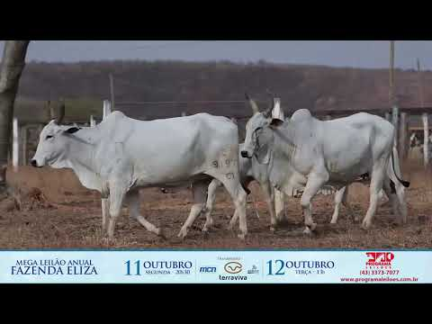LOTE 213