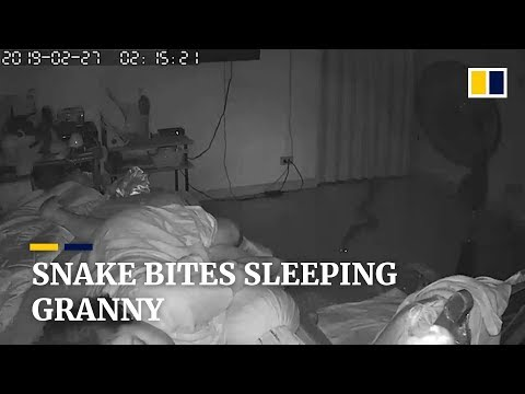 Randumb - Python Bites Grandmother While She Sleeps