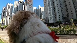 전지적 강아지 시점 산책 / 고프로 히어로8