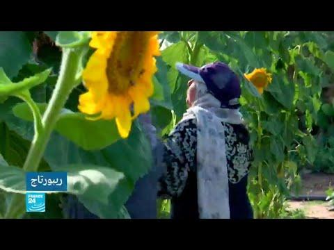 نساء غزاويات يحوّلن أراض قرب السياج الفاصل إلى منطقة فلاحية واعدة