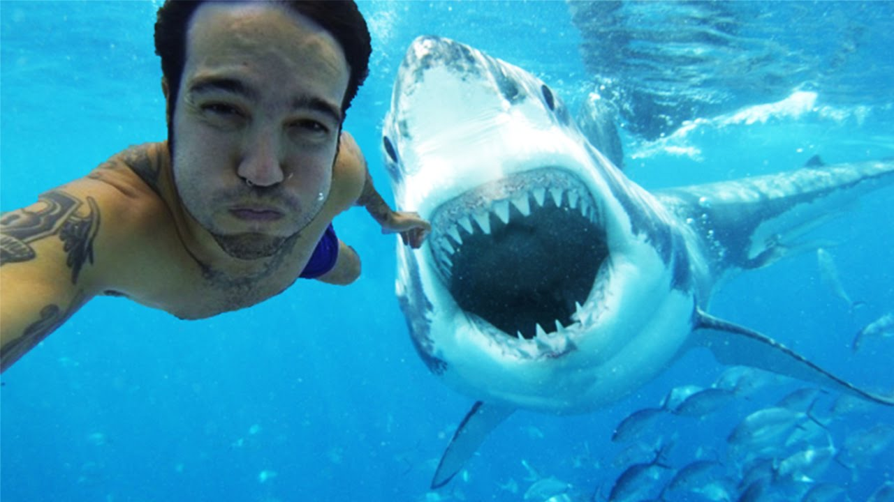 The Most Dangerous Selfies Ever Taken YouTube - The 21 best animal selfies of all time