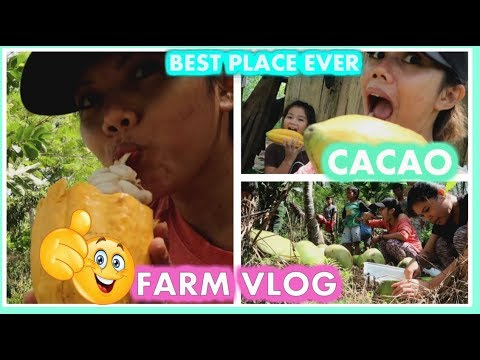 ONE OF THE  BEST PLACES ON EARTH CAN BE FOUND IN DAVAO ORIENTAL|FARM VLOG!