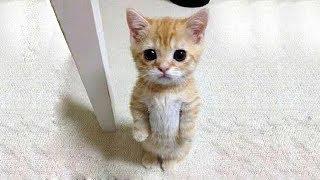「猫かわいい」 すごくかわいい子猫 - 最も面白い猫の映画 #245