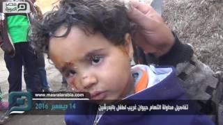 بالفيديو| أسرة الطفل معتز تروي قصة نجاته من حيوان البدرشين المفترس