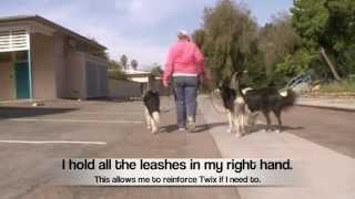 Loose Leash Walking: Multiple Dogs