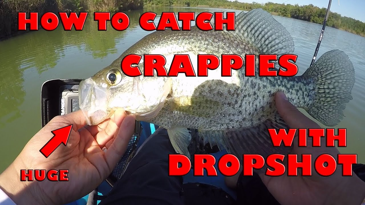 How To Dropshot For Crappies