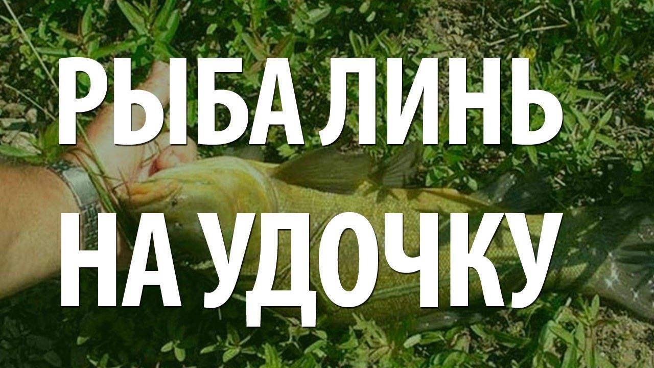 манка для рыбалки как приготовить