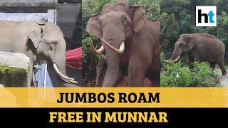 Watch: Elephants roam the streets in Munnar as lockdown keeps tourists away