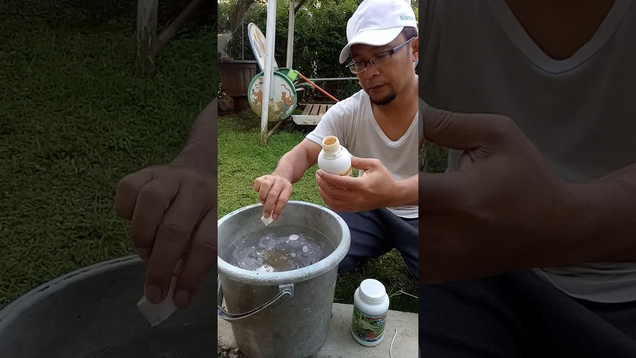 Aplikasi Pupuk Nongfeng Durian3 Youtube Paket Durian