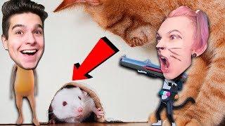 НИКОГДА НЕ ДОВЕРЯЙ 🐱 КОШКАМ! (Ratty Catty)