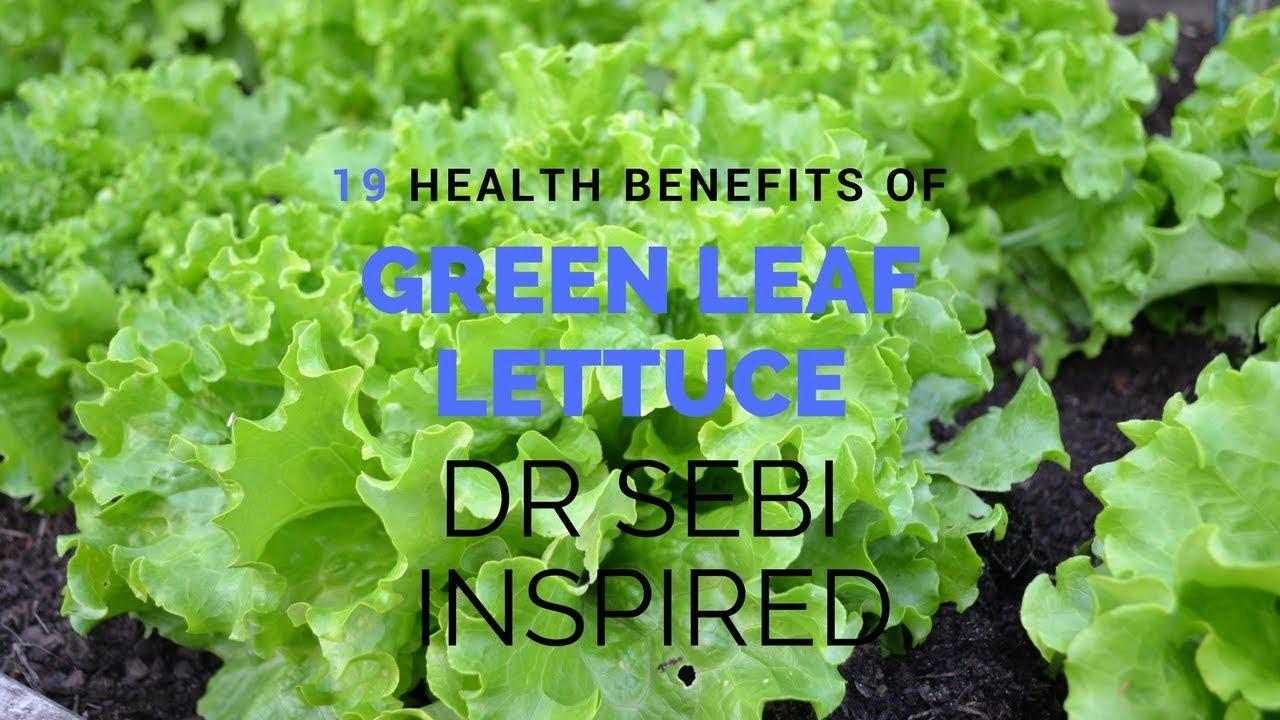 Dr Sebi Diet Fighting ADHD Alkaline Electric Food Green Leaf Lettuce