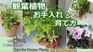 観葉植物の手入れと育て方🍃寄せ植えその後、ハイドロカルチャーも♪Care for House Plants🌱& Semi-Hydroponics