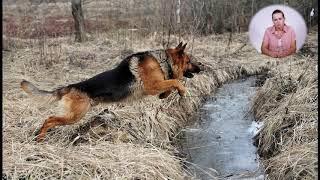 Тренинг Немецкой Овчарки. От щенка до взрослой собаки.