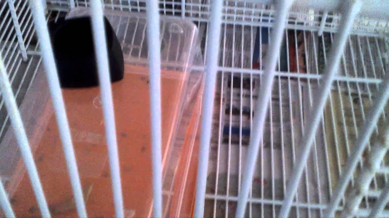Diy Sugar Glider Cage Youtube