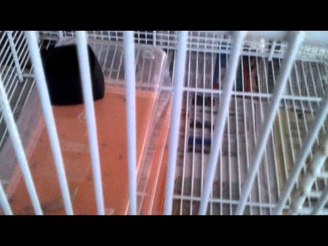 Diy Sugar Glider Cage