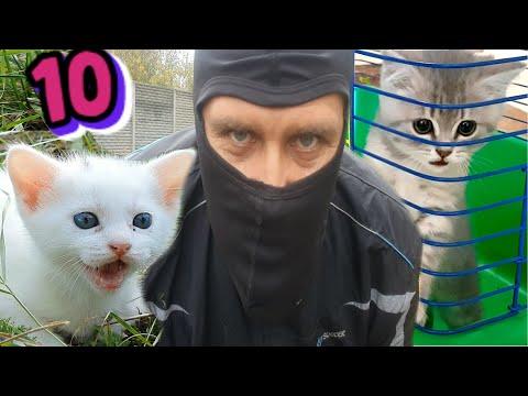 Сложный выбор для кота Макса. Спасение котенка или кошки? Что то пошло не так...