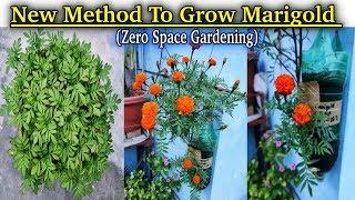 Smart & Unique Way To Grow Marigold Plants In Waste Plastic Bottles || Zero Space Gardening