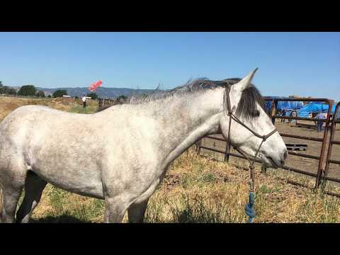 2017 Monroe, WA Extreme Mustang Makeover, Luna's Story