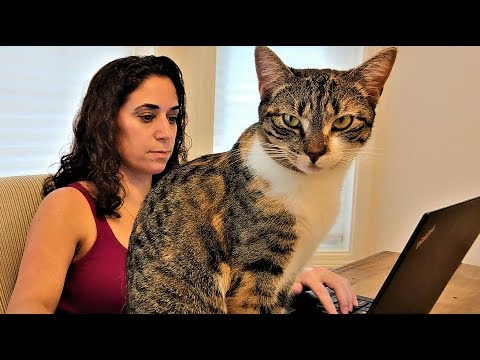 Working from Home with Cats and Kittens