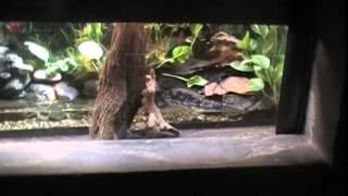 Гавайи 2013.разнообразие животных в ZOO.USA.Spokane 2ч.