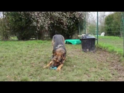 Harry A Adopter Au Refuge Spa D Orgeval Youtube