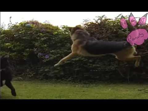 FUNNY CAT/DOG VIDEOS