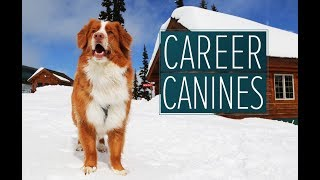 Darwin the Avalanche Rescuer  -