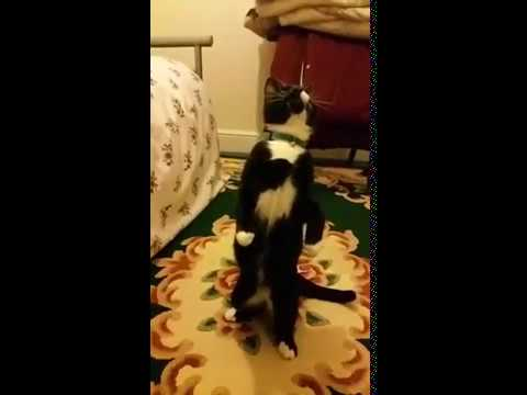 Slow Motion cat jumping