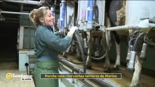 Perche Rose : Les vaches laitières de Marion - La Quotidienne la suite