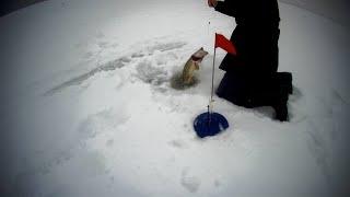 Зимняя рыбалка на заповеднике озеро КОКАЙ
