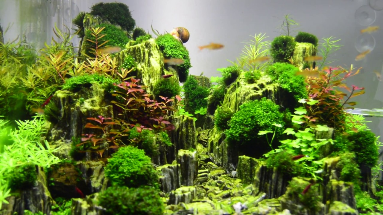 Rocks For Planted Aquarium - 1000+ Aquarium Ideas
