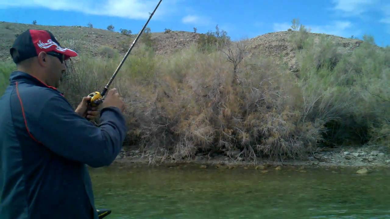 Image gallery lake havasu fishing for Fishing report az