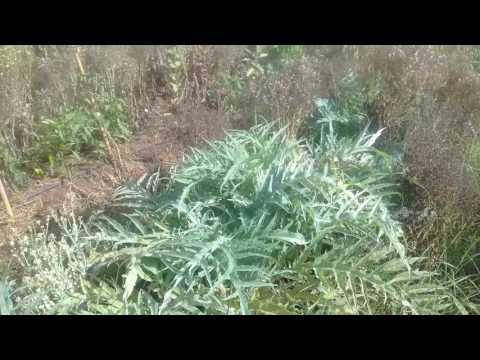 Permaculture au maroc.  Ferme biologique maamoura.
