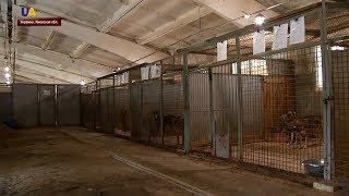 День защиты прав животных в киевском муниципальном приюте