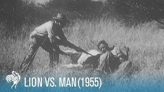 Lion v Man: WARNING: Upsetting Hunting Scenes (1955) | British Pathé