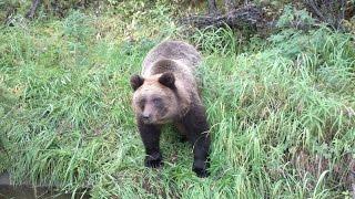 Работа на севере пробное видео Медведь