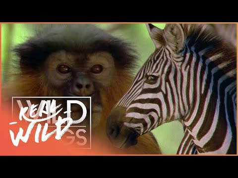 Wild Family Secrets  Full Series Live Stream  Wild Things