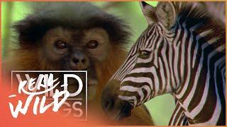 Wild Family Secrets | Full Series Live Stream | Wild Things