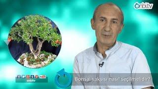 Bonsai saksısı nasıl seçilir?