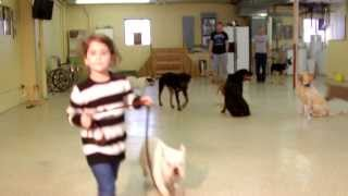 A Day At Mans Best Friend Dog Training