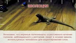 Обмани меня Обещания Путина.flv
