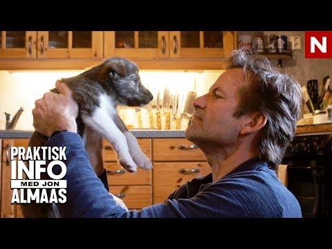Jon er på utkikk etter en hund | Praktisk Info | TVNorge